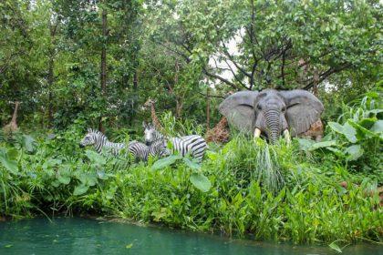 Informacje i ciekawostki o roślinach i zwierzętach