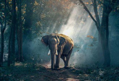 Informacje i ciekawostki o słoniach dla dzieci