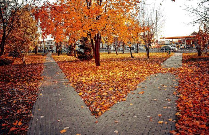 drzewa i liście