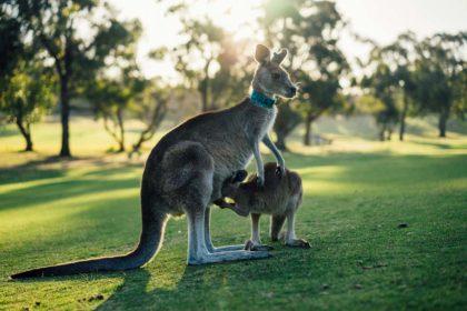 Australia ciekawostki przyrodnicze