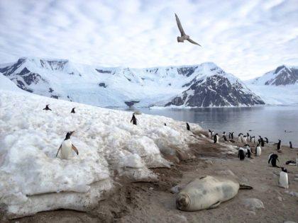 Najciekawsze zwierzęta Antarktydy