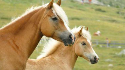 16 ciekawostek o koniach dla dzieci