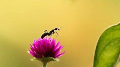 100 ciekawostek o mrówkach