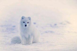 22 fascynujące ciekawostki o zimie dla dzieci