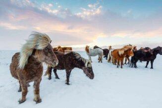 30 ciekawostek o zimie