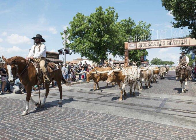 kowboje na koniach
