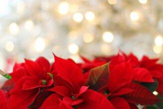 Ciekawostki o Wigilii Bożego Narodzenia