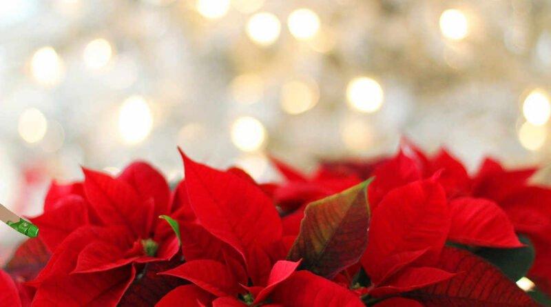 okres świąteczny
