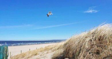 plaża i ptak