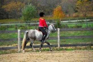 Jak znaleźć profesjonalny obóz konny?