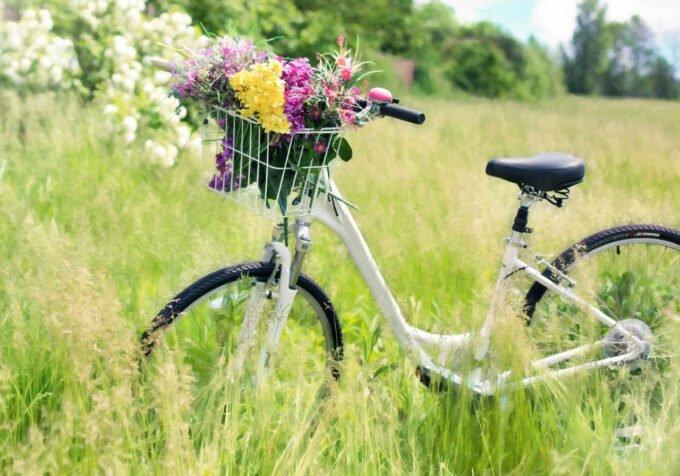rower i łąka