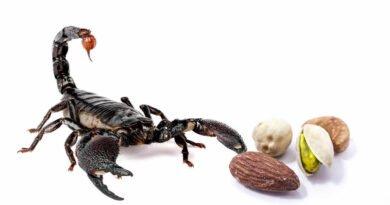 skorpion i orzechy