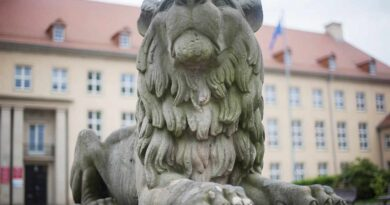 lew w Koszalinie
