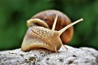 31 Niezwykłych Ciekawostek i Faktów o Ślimakach
