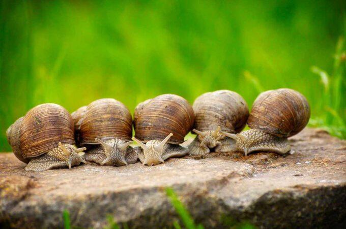 5 ślimaków