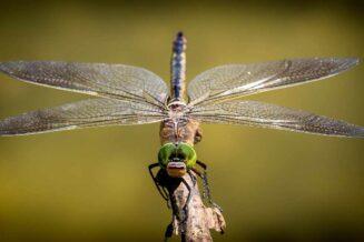 32 Najciekawsze Ciekawostki o Ważkach
