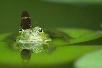 42 Fascynujących Ciekawostek i Informacji o Żabach