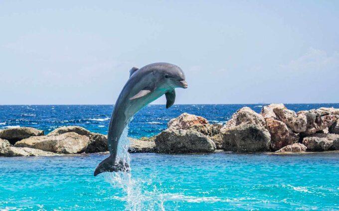 Wysoki skok z wody