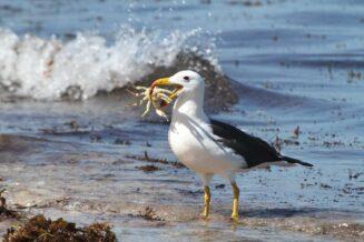 Albatrosy - Interesujące Ciekawostki, Informacje i Fakty