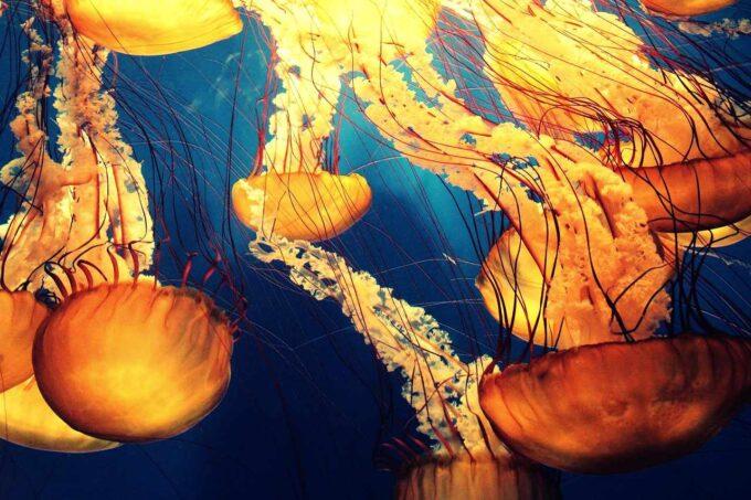 meduzy w głębokim oceanie