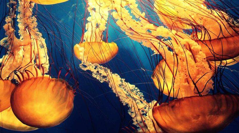 głęboki ocean
