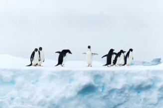 20 Ciekawostek o Pingwinach dla Dzieci
