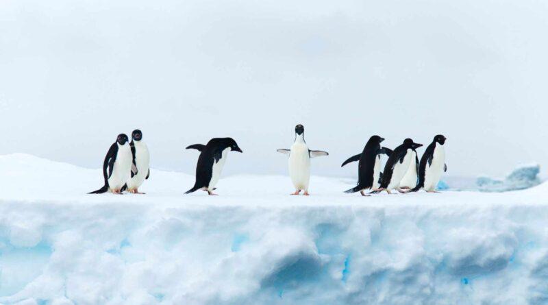 na lodowacu
