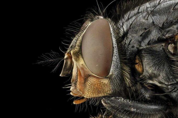przybliżenie owada
