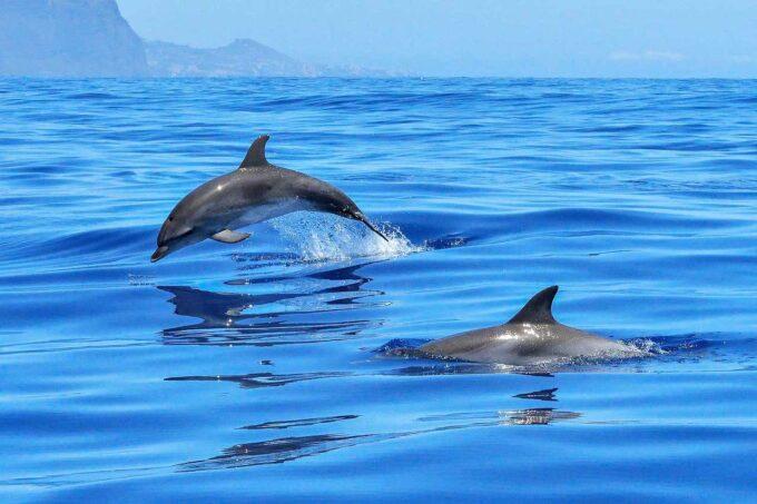 ssaki morskie