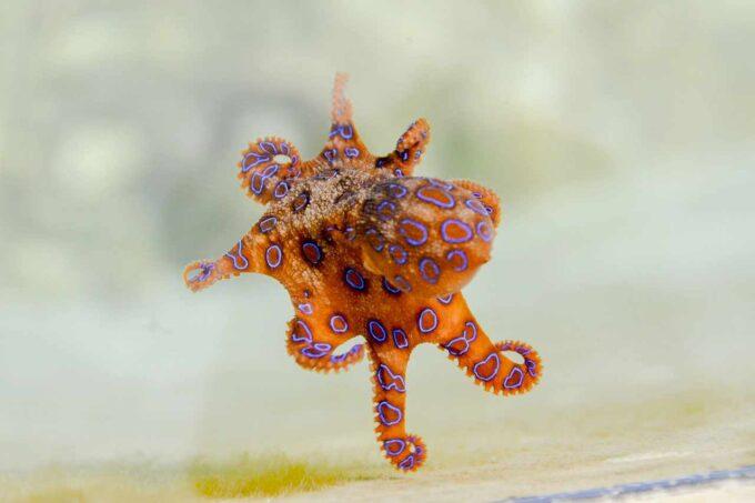 zwierze morskie