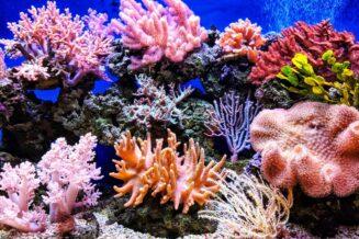 Rośliny które występują w Oceanie Spokojnym