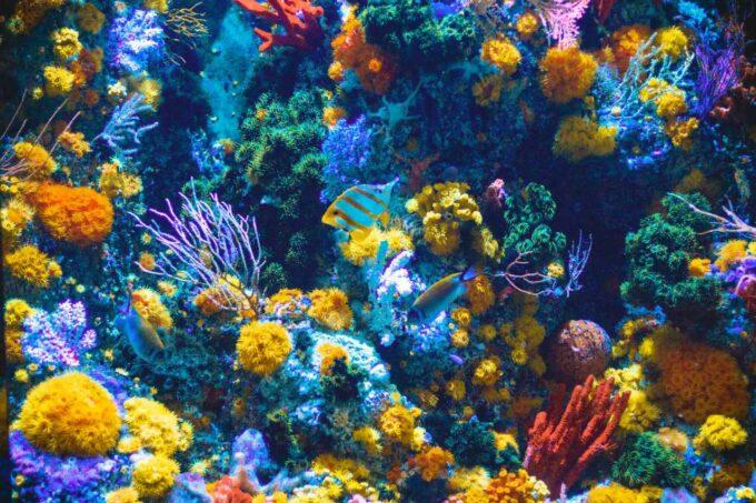 rafa koralowa i zwierzęta