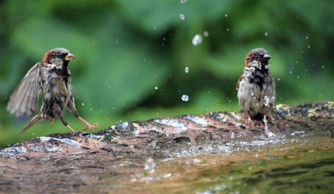 mokre ptaszki