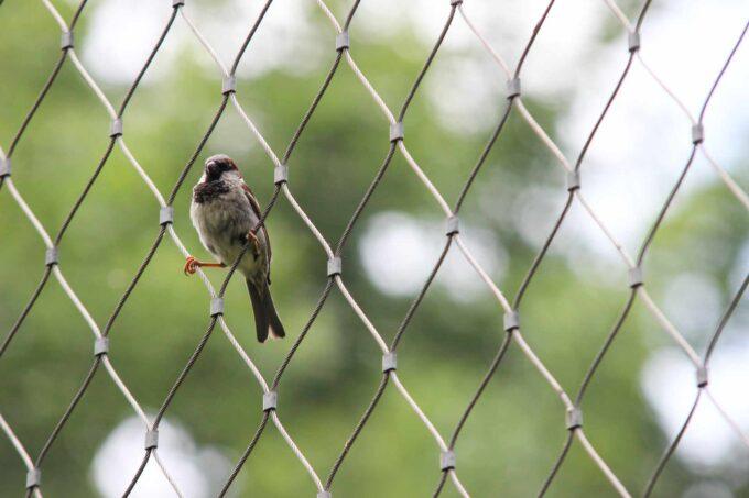 ptak na siatce