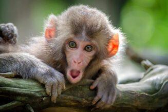 Ciekawostki, fakty oraz informacje o małpach dla dzieci