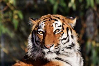 10 Interesujących Ciekawostek o Zwierzętach Mięsożernych