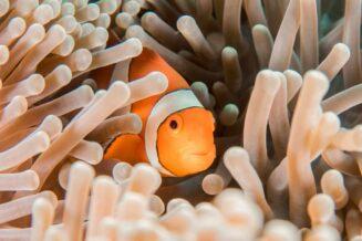 63 Interesujące Ciekawostki dla Dzieci o Rybach