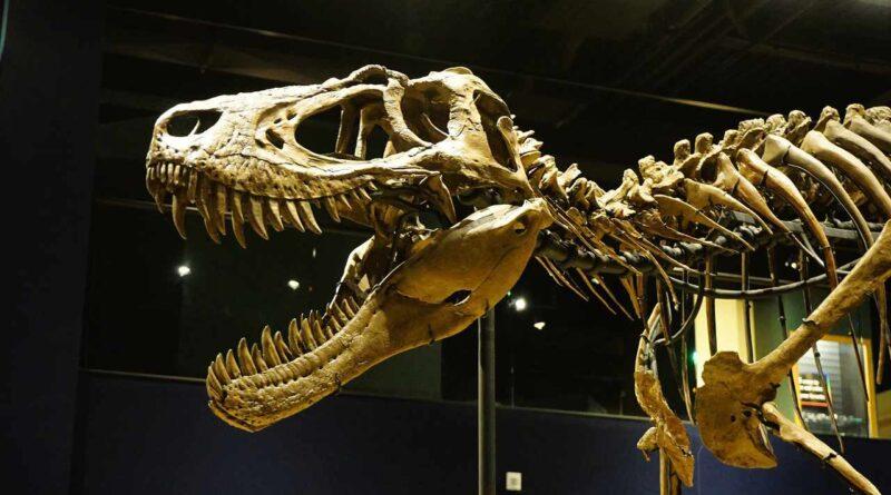 dinozaur T-Rex
