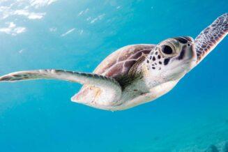 56 Fantastyczne Ciekawostki o Żółwiach