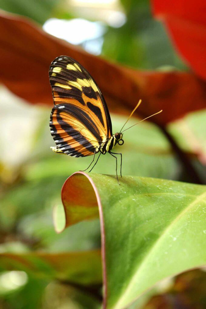 motyl na liściu