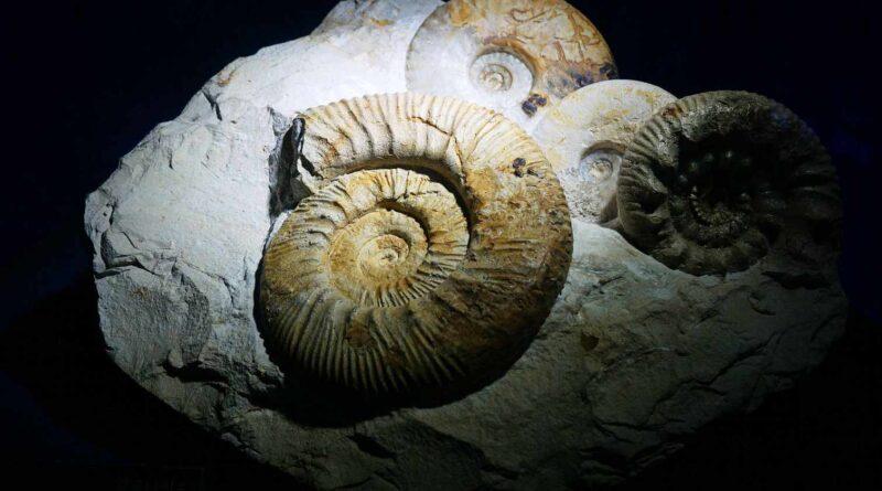 paleozoik