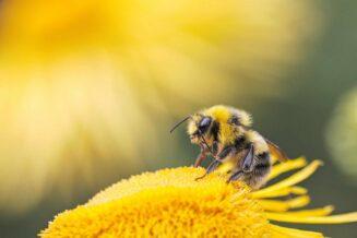 54 Fantastyczne Ciekawostki o Pszczołach