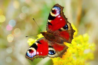 53 Fantastyczne Ciekawostki o Motylach