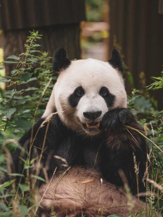 zdjęcie z zoo