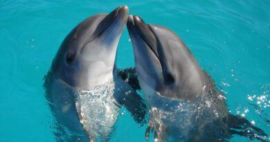 2 delfiny