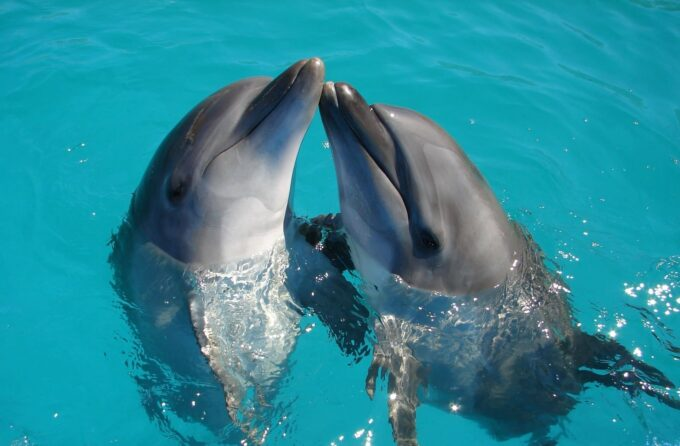 dwa delfiny