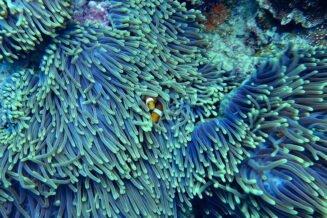 Fascynujące informacje i ciekawostki o Koralowcach dla dzieci