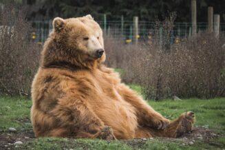 10 ciekawostek o niedźwiedziach dla dzieci