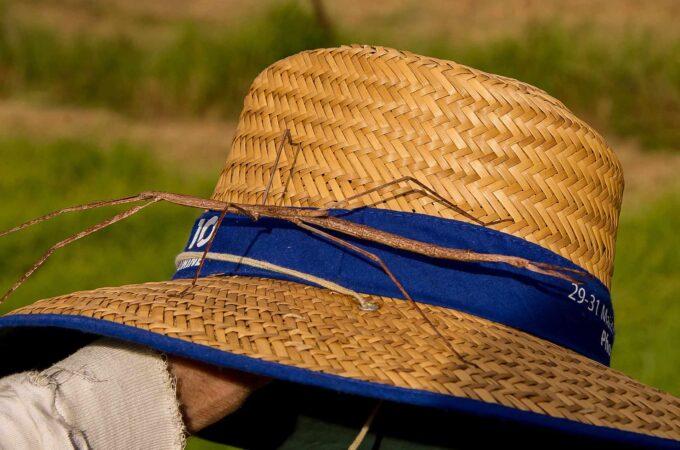 patyczak na kapeluszu