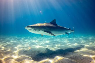 O Rekinach - 10 zaskakujących ciekawostek dla dzieci